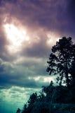 Siluetta dell'albero con il cielo scuro e nuvoloso sulla natura b di serenità Immagine Stock