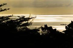 Siluetta dell'albero contro il tramonto del mare Immagini Stock Libere da Diritti
