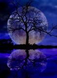 Luna ed albero Immagini Stock Libere da Diritti