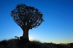 Siluetta dell'albero del fremito Fotografia Stock