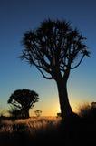 Siluetta dell'albero del fremito Fotografia Stock Libera da Diritti