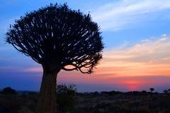 Siluetta dell'albero del fremito sul fondo luminoso del cielo di tramonto, paesaggio africano magnifico in Keetmanshoop, Namibia immagine stock