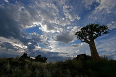 Siluetta dell'albero della faretra Immagini Stock