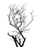 siluetta dell'albero della filiale Immagini Stock Libere da Diritti
