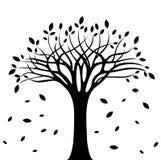 Siluetta dell'albero di autunno sopra fondo bianco immagine stock libera da diritti