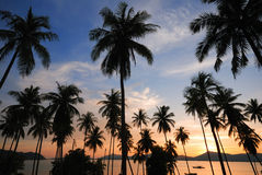 Siluetta dell'albero di noce di cocco Immagini Stock
