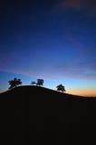 Siluetta dell'albero di quercia Fotografie Stock