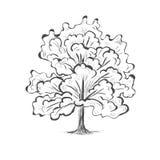 Siluetta dell'albero di schizzo della quercia Immagine Stock Libera da Diritti