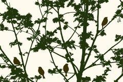 Siluetta dell'albero di sorba Fotografia Stock
