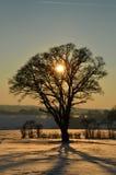Siluetta dell'albero di tramonto Immagine Stock