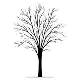Siluetta dell'albero di vettore Immagini Stock Libere da Diritti