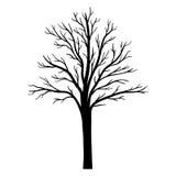 Siluetta dell'albero di vettore Fotografia Stock Libera da Diritti