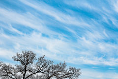 Siluetta dell'albero e cielo nuvoloso blu Immagine Stock