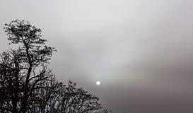 Siluetta dell'albero e della luna Immagini Stock Libere da Diritti