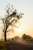 Siluetta dell'albero e della strada ad alba Fotografia Stock