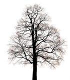 Siluetta dell'albero fantastico Immagini Stock Libere da Diritti