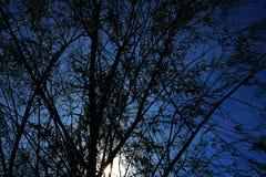 Siluetta dell'albero morto Fotografia Stock
