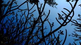Siluetta dell'albero morto Fotografie Stock