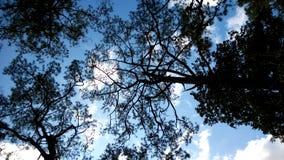 Siluetta dell'albero morto Immagine Stock Libera da Diritti