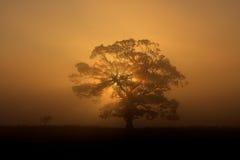 Siluetta dell'albero in nebbia fotografia stock