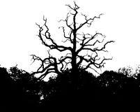 Siluetta dell'albero nel parco immagini stock libere da diritti