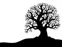Siluetta dell'albero senza foglio 1 Fotografia Stock Libera da Diritti