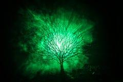 Siluetta dell'albero spaventoso di Halloween con il fronte di orrore su fondo tonificato nebbioso scuro con la luna dal lato post Immagini Stock