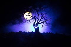 Siluetta dell'albero spaventoso di Halloween con il fronte di orrore su fondo tonificato nebbioso scuro con la luna dal lato post Fotografia Stock Libera da Diritti