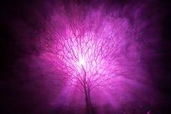 Siluetta dell'albero spaventoso di Halloween con il fronte di orrore su fondo tonificato nebbioso scuro con la luna dal lato post Fotografie Stock Libere da Diritti