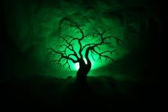 Siluetta dell'albero spaventoso di Halloween su fondo tonificato nebbioso scuro con la luna dal lato posteriore fotografia stock libera da diritti