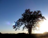 Siluetta dell'albero su cielo blu Fotografia Stock Libera da Diritti