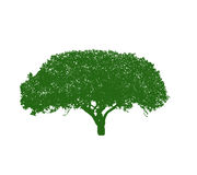 Siluetta dell'albero su priorità bassa bianca illustrazione vettoriale