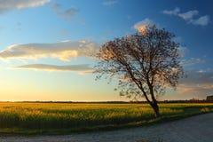 Siluetta dell'albero sul tramonto Immagini Stock Libere da Diritti