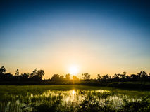 Siluetta dell'azienda agricola di agricoltura del riso Immagini Stock