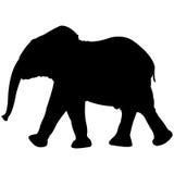 Siluetta dell'elefante del bambino isolata su bianco Immagini Stock