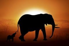 Siluetta dell'elefanti nel tramonto Fotografia Stock
