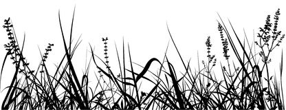 Siluetta dell'erba Fotografia Stock