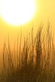 Siluetta dell'erba ad alba Fotografia Stock Libera da Diritti
