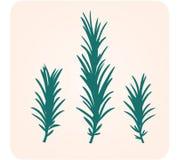 Siluetta dell'erba della Rosemary Fotografia Stock