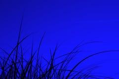 Siluetta dell'erba nella notte Immagini Stock