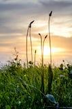 Siluetta dell'erba in un campo Fotografia Stock