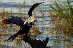 Siluetta dell'uccello Immagine Stock Libera da Diritti