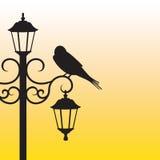 Siluetta dell'uccello che si siede sul palo della luce Fotografie Stock