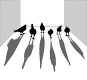 Siluetta dell'uccello Piccione che cammina sul pavimento Assomigli ai gruppi Fotografia Stock