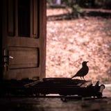Siluetta dell'uccello su una stufa Fotografie Stock