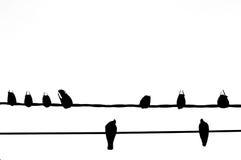 Siluetta dell'uccello sul cavo di cavo elettrico su bianco Fotografie Stock