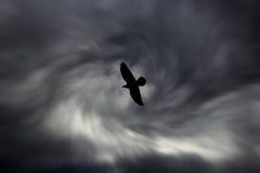 Siluetta dell'uccello sul fondo scuro del cielo nuvoloso Fotografie Stock Libere da Diritti