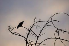 Siluetta dell'uccello sulla filiale Fotografie Stock Libere da Diritti