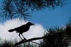 Siluetta dell'uccello in un albero Immagini Stock Libere da Diritti
