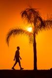 Siluetta dell'uomo che cammina accanto alla palma sul tramonto Fotografia Stock